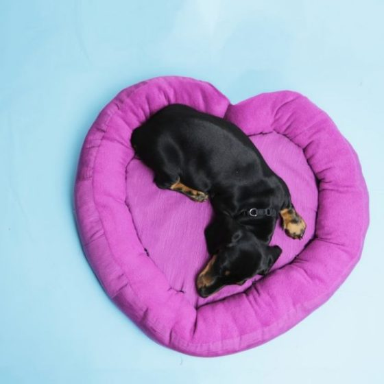 Hundeherzbett Hundebett Nähen fürs Tier kostenlose Schnittmuster Gratis-Nähanleitung