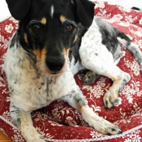 Upcycling Hundekissen Hundekörbchen kostenlose Schnittmuster Gratis-Nähanleitung